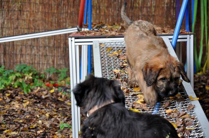 Amberlie und Aurélie auf dem Gittersteg