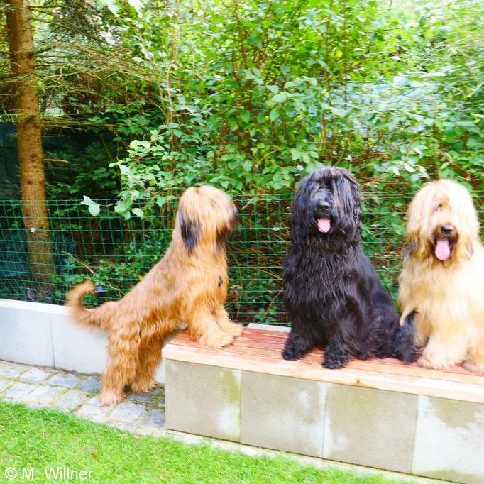 Matilda mit den beiden Jungs BenBen und WuWu