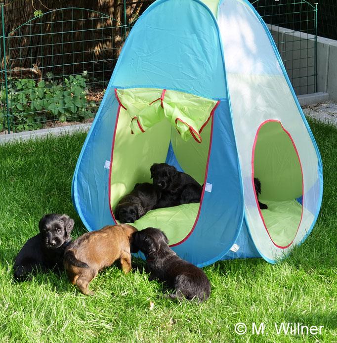 Ausflug ins Zelt