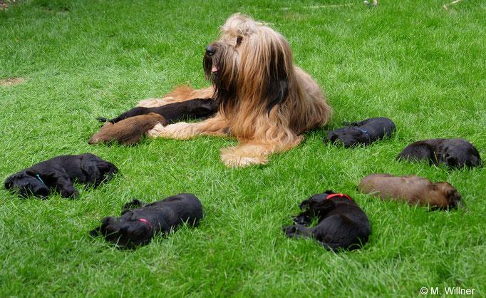 Mama mit allen Babys