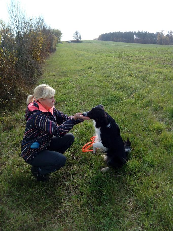 mach ein Kunststück mit deinem Hund