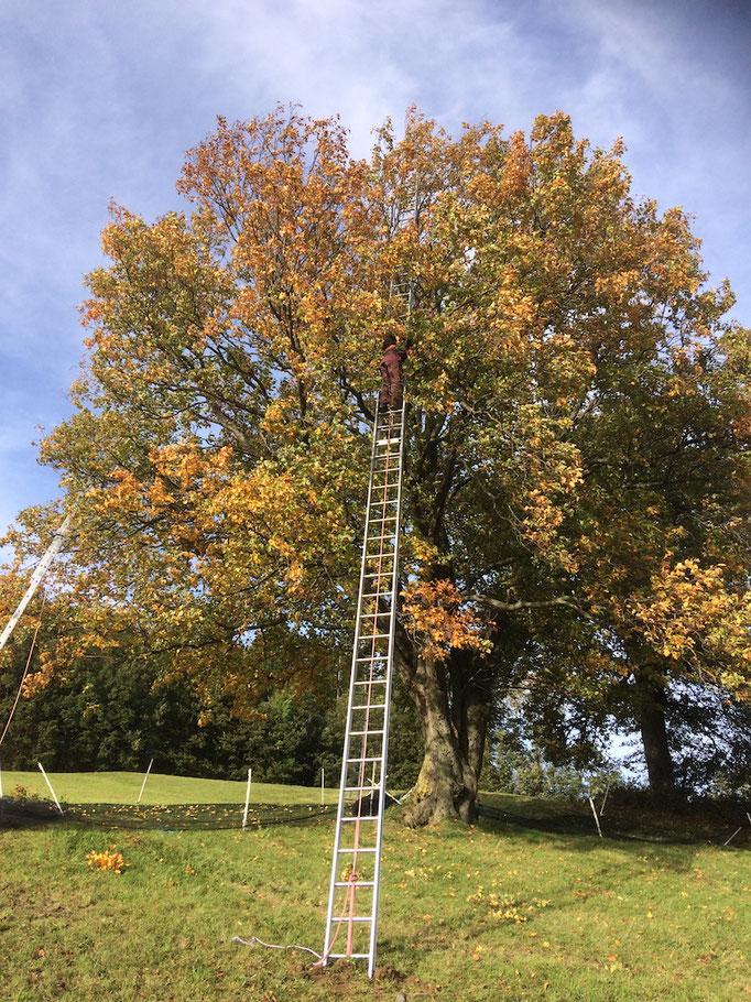 """Unser 4. großer Baum (""""Grabnerfeld"""") wird in Angriff genommen"""