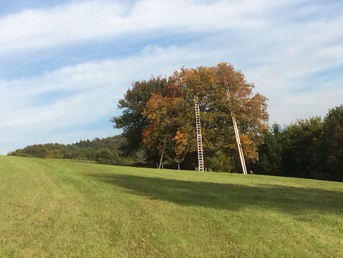 unser Grabnerfeld-Baum; ein mächtiges Teil