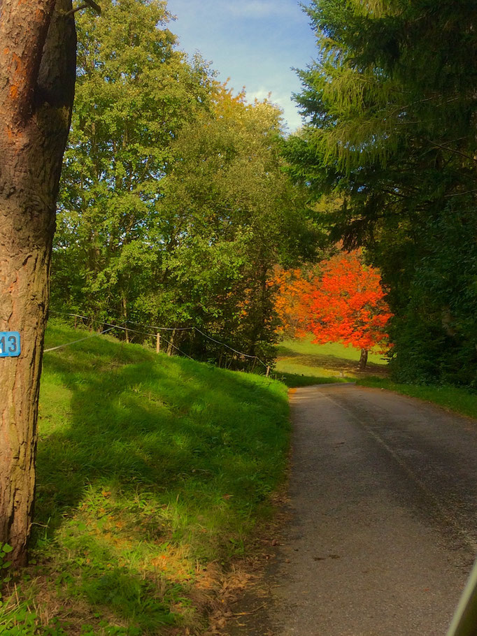 4.10.17; wenn die Bäume ins Auge leuchten ist Oktober im ElsbeerReich