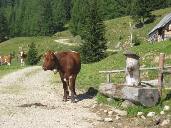 Stoirinalm, Ferienwohnung Wörschachwald (bei Tauplitz, Bad Mitterndorf, Steiermark Salzkammergut)