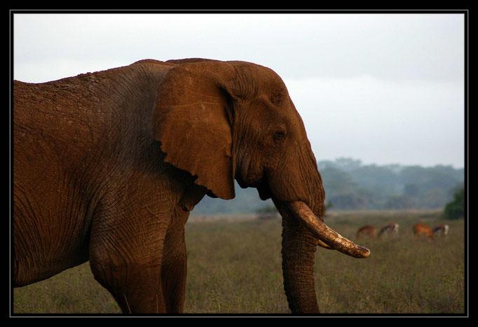 © motion2 | Alexandra Lindenthal, Kenya