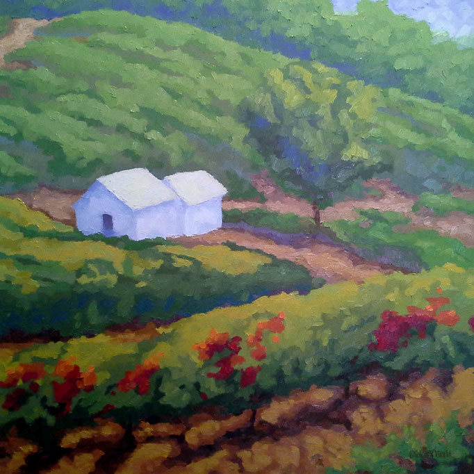 Valley Vineyard, 24 x 24, SOLD