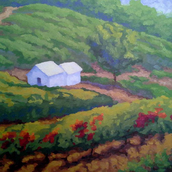 Valley Vineyard, 24 x 24, SOLD
