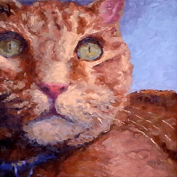 Into Orange, 12 x 12, Commission, SOLD- contact me for your pet portrait today... be inspired...