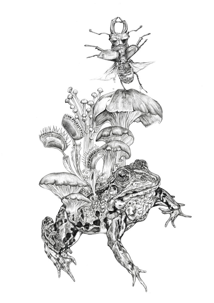 'Frog' Illustration for my series of artprints, pencil on paper
