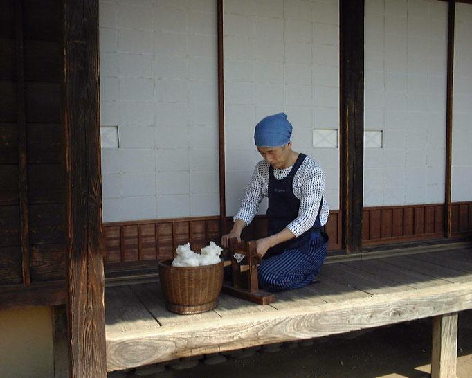 綿繰り機で綿繰り作業