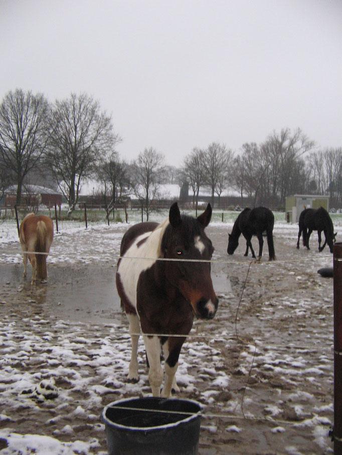 Der 1. Schnee ist da ......!