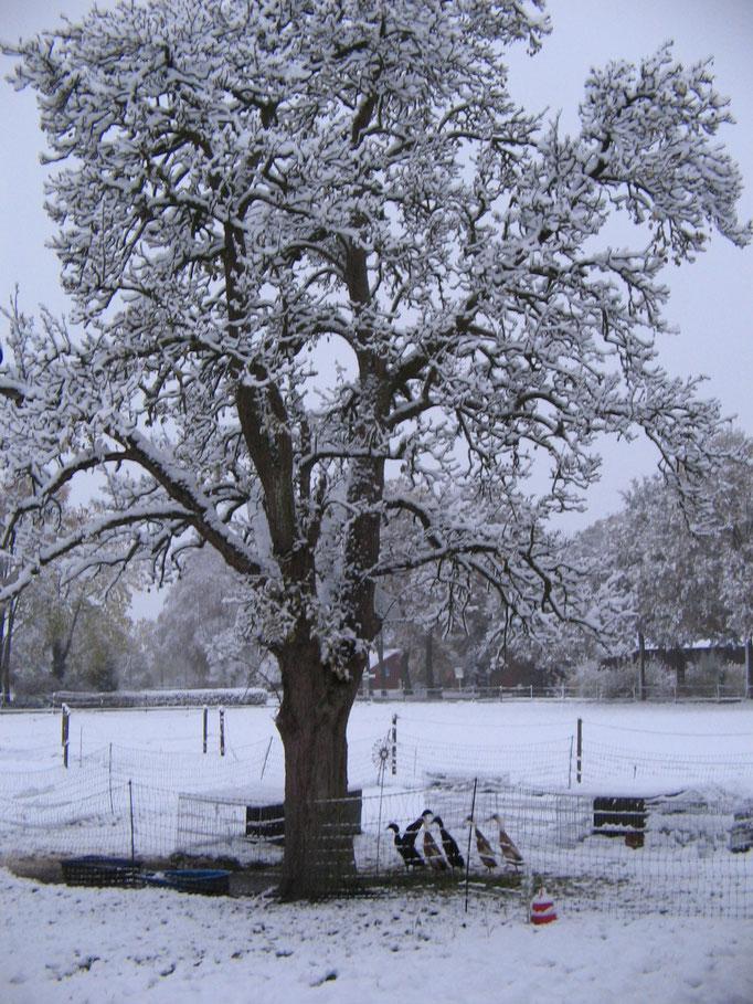 Unsere Schnatties im Schnee