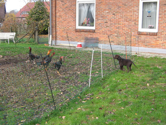 Die Hühner sind erstmal wichtiger.....