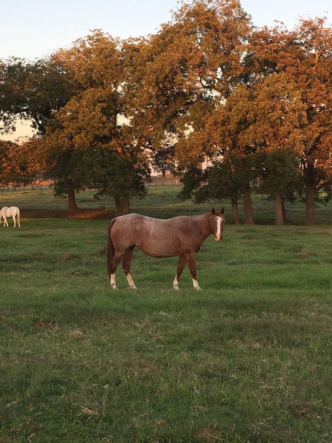 Letzter Tag auf der Ranch in Texas