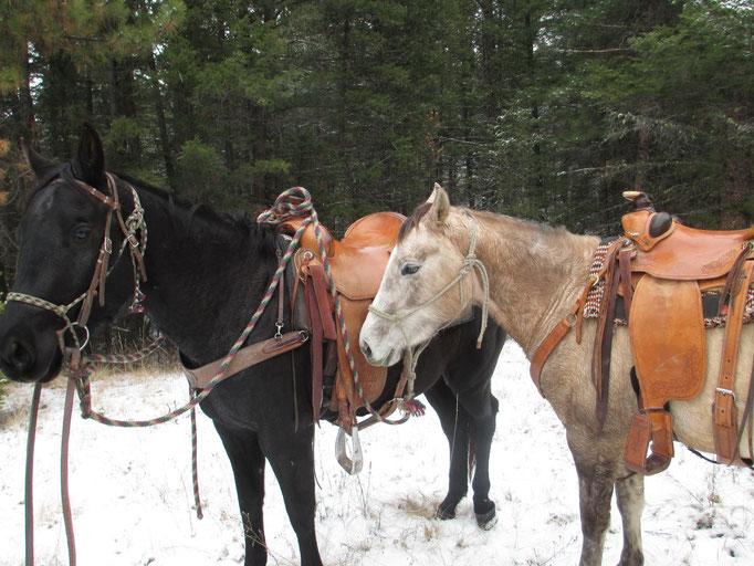 Auch im darauf folgendem Winter durfte sie einem anderen jungen Pferd Sicherheit als Führpferd geben