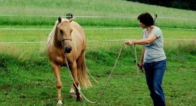 Vorbereitung auf first saddleing Auguts 2011