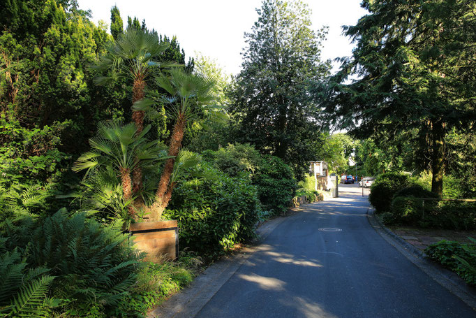 Pflanzenvielfalt in Gleisweiler
