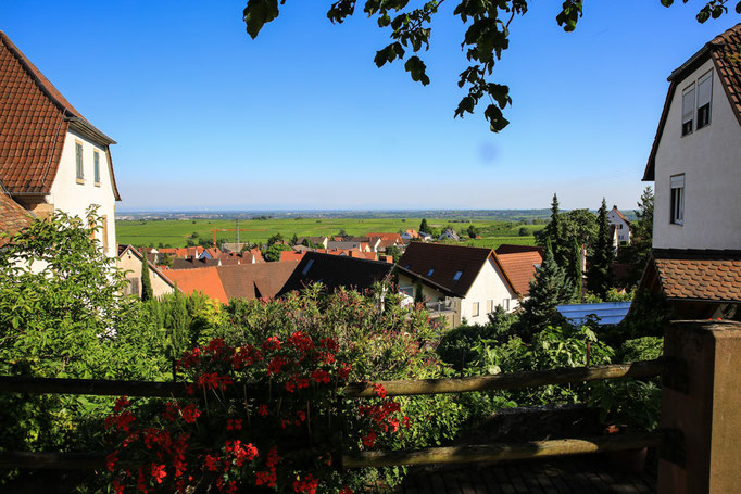 Blick vom Hotel-Pension Weinberg in die Weinberge