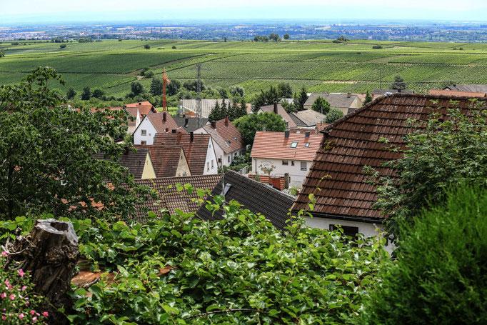 Fernblick von der Terrasse in die Weinberge