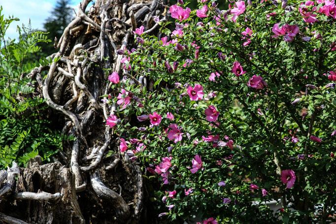 """Pflanzenvielfalt im Garten vom """"Hotel-Pension Weinberg"""""""