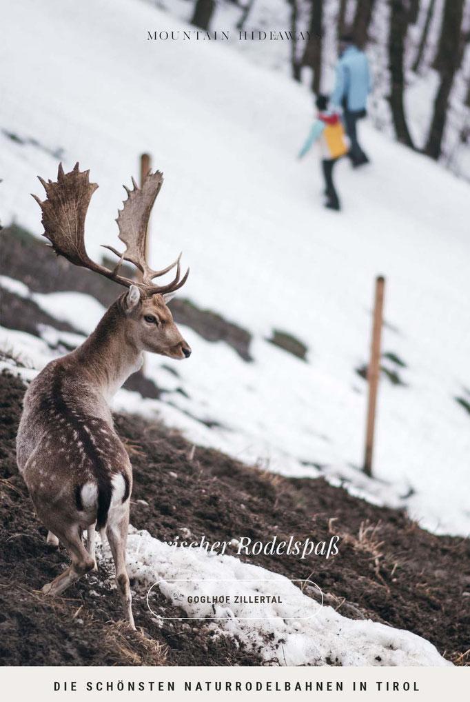 die schönsten Naturrodelbahnen in Tirol: Rodelbahn Goglhof in Fügen im Zillertal - Spielplatz, Wildgehege, Rodelverleih, Rodeltaxi, Nachtrodeln #mountainhideaways