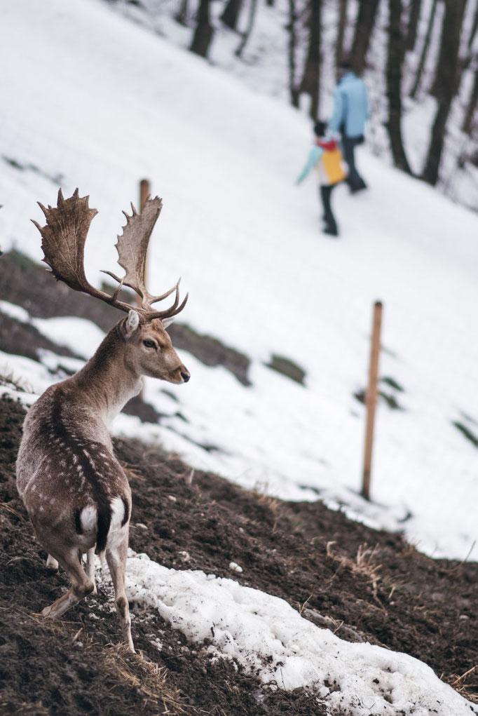 die schönsten Naturrodelbahnen in Tirol: Rodelbahn Goglhof, Fügenberg - Zillertal #rodelbahn #tirol #alpen #tuxeralpen #zillertal #mountainhideaways