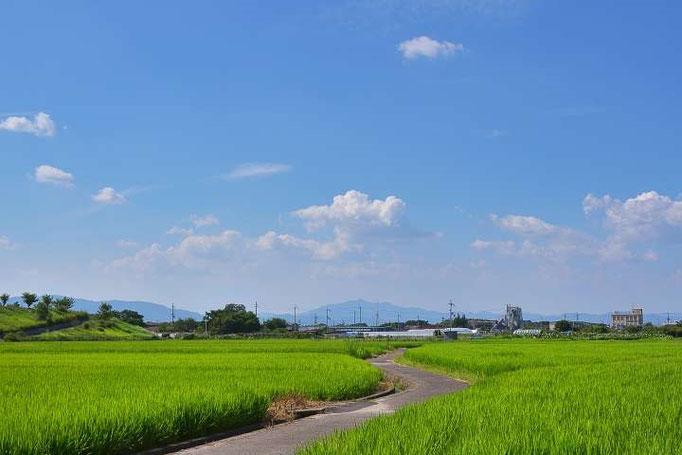 優しい雲が稲を守っています