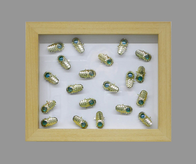 scarabée - 13 - Holz, Metall, Glas - 28,5 x 34,5 x 5