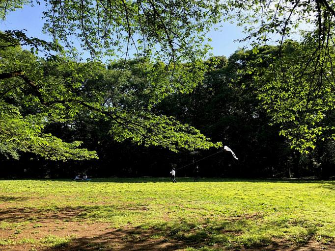 新緑と凧揚げ 駒場公園