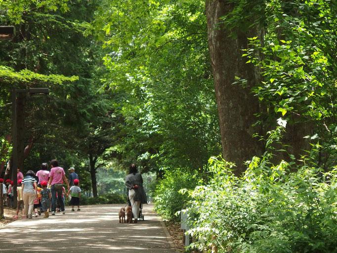 2015/5林試の森で散歩