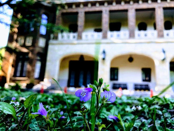 紫鷺苔の咲く駒場公園