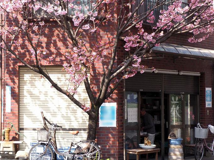 2019/04街角の桜 by @&@