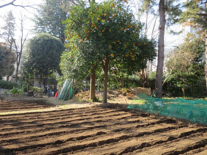 畑の準備 菅刈公園