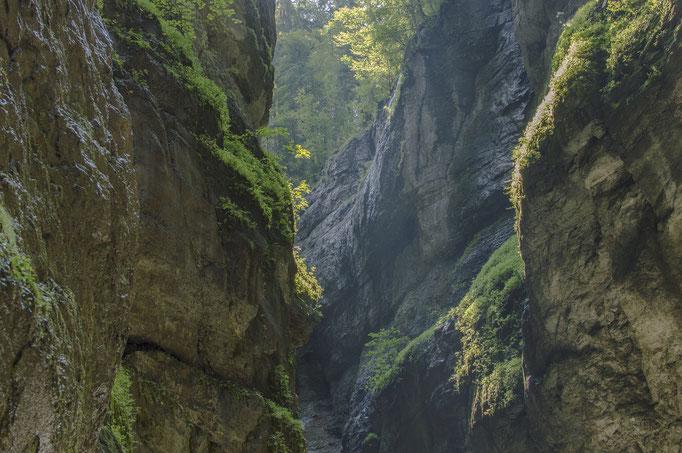 Nature at the Partnachklamm in Garmisch
