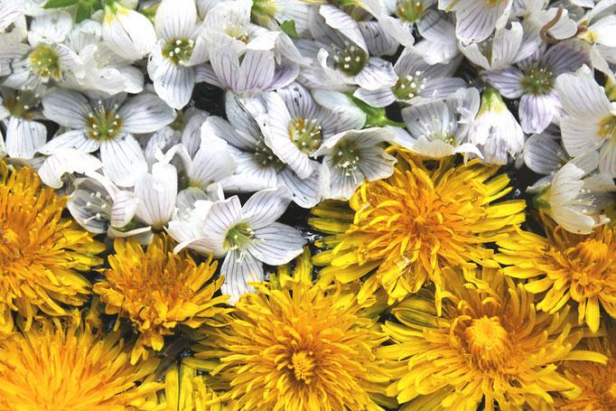 Blumen Vielfalt
