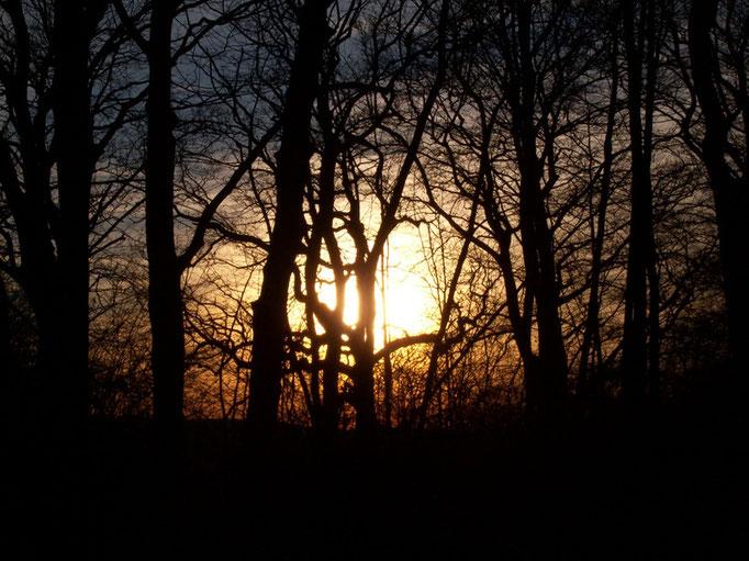 Abendhimmel im Wald