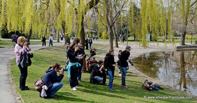 WIFI Fotowalk im Wiener Stadtpark