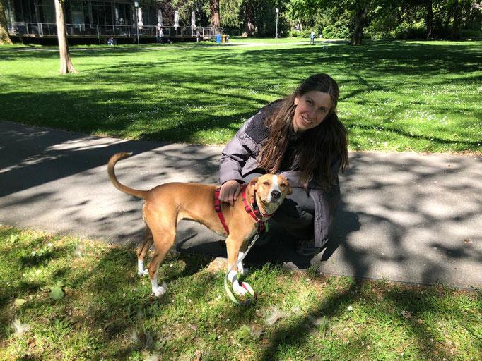 Hundemischling