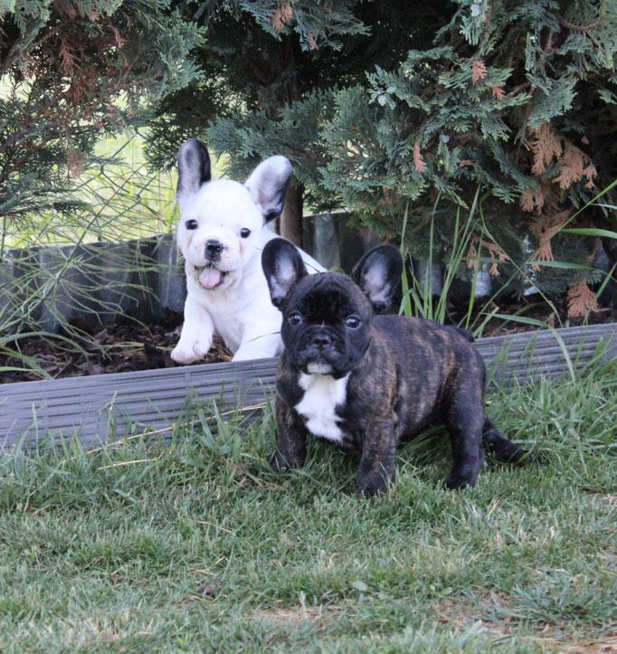 Carlotta und Cleo