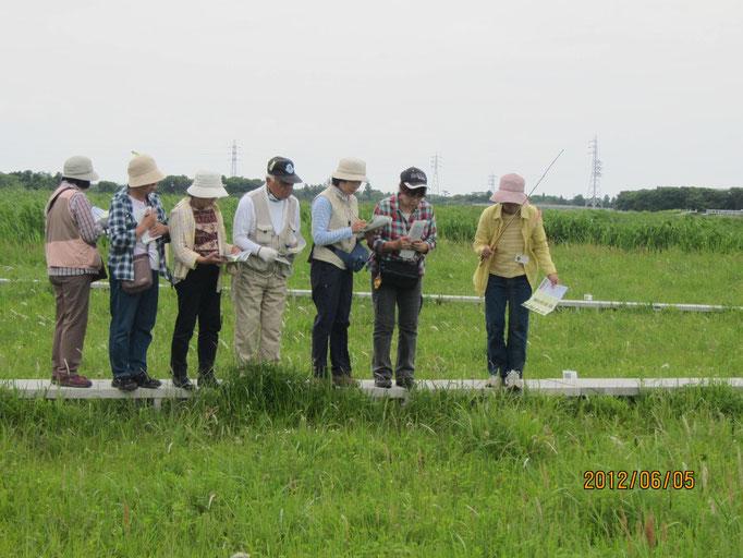 成東・東金食虫植物群落 観察風景