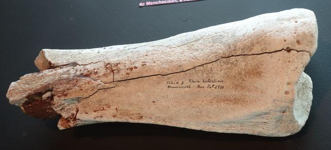 Tibia gauche de rhinocéros laineux (fragment) /Photo musée