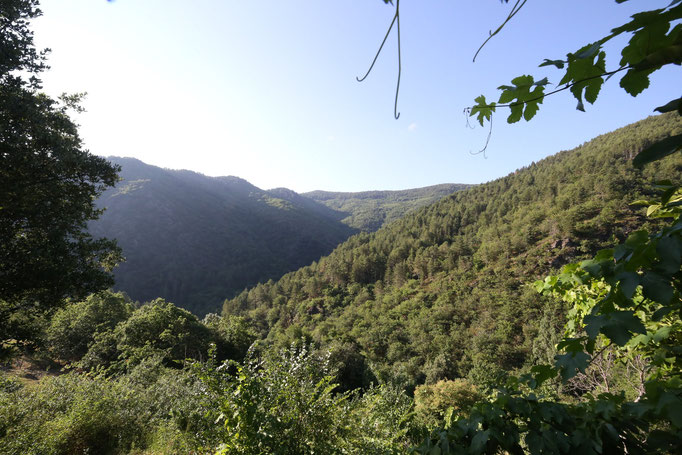 Panorama depuis les yourtes