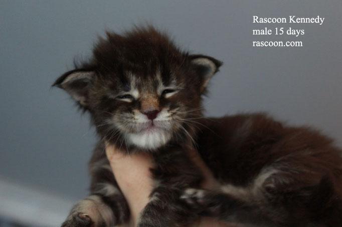 Rascoon Kennedy male 15 days