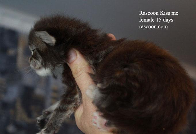 Rascoon Kiss me female 15 days