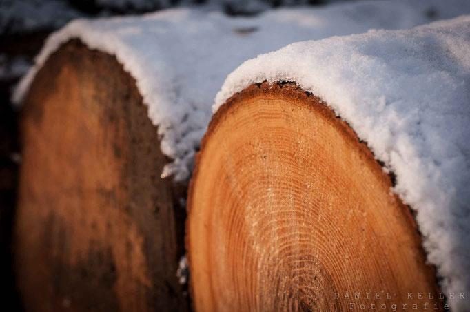 Holzstämme im Winter / Daniel Keller Fotografie