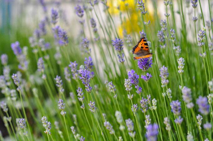 Schmetterling / Daniel Keller Fotografie