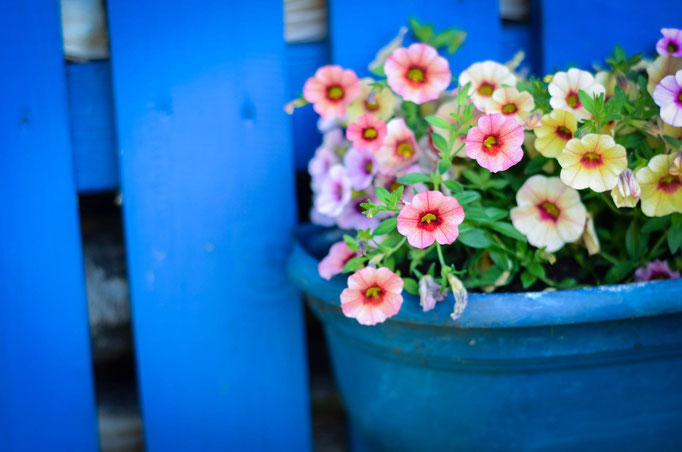 Blumen / Daniel Keller Fotografie