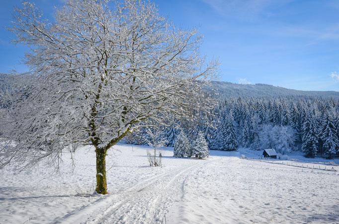 Winterlandschaft Hornisgrinde / Ortenau  / Daniel Keller Fotografie