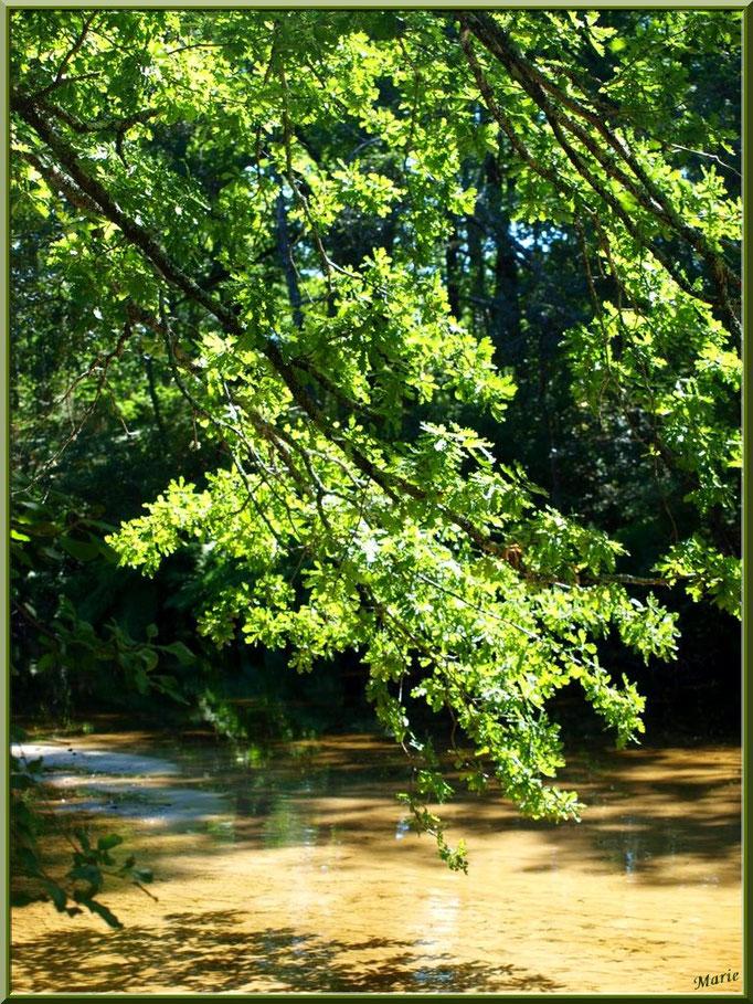 Chênes et leurs reflets sur le Canal des Landes au Parc de la Chêneraie à Gujan-Mestras (Bassin d'Arcachon)